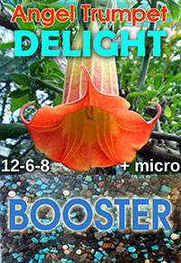Angel Trumpet Delight - Smart-Release Booster  Click to see full-size image