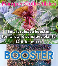 Pamper Collectibles - Smart-Release Booster  Click to see full-size image